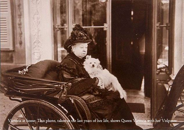 Queen Victoria and her Italian  volpino