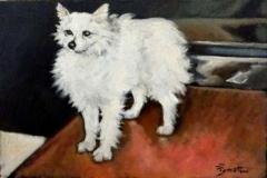 Il Volpino ritratto di Luigi Pignataro (1943-2009)